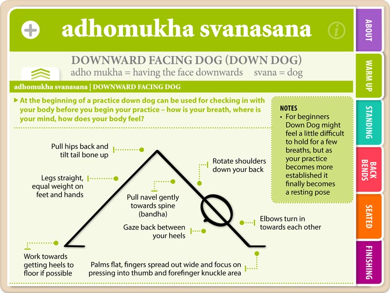 Downdog flash card, showing asana name and instructions on what to do when in the asana
