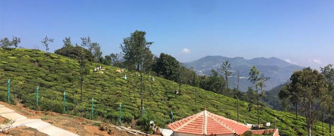 Mountain Top Ayurvedic Clinic is surrounded by working tea plantations