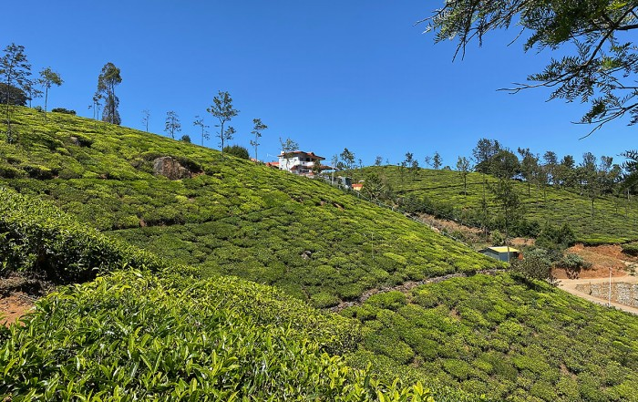 Mountain Top Clinic, Ayurveda in the Nilgiri tea plantations