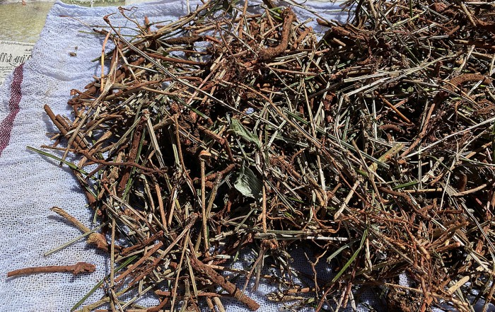 Ayurvedic roots collected for use in therapies and medicines